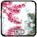 تصویر زمینه HD شکوفه