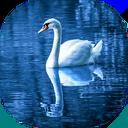 Photo Editor | Water Reflection