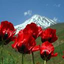 تصویر زنده طبیعت ایران