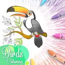 نقاشی پرندگان