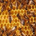 درآمدملیونی  ازپرورش زنبورعسل