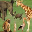 Click Zoo