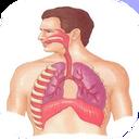آناتومی انسان