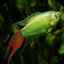 پرورش ماهی های زینتی