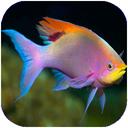 ماهی ها