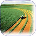 کشاورزی