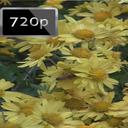 پس زمینه متحرک زنبور HD