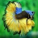 ماهی و آکواریوم