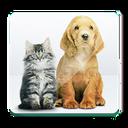 Pets (حیوانات خانگی)