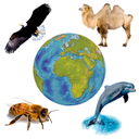 Sounds of Fauna. Set animal voices to the ringtone