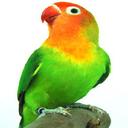 gardanbirds