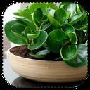 نگهداری گیاهان و سبزیجات اپارتمانی