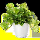 گل آپارتمانی و کاکتوس
