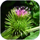 گیاه درمانی
