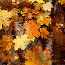 پس زمینه پاییز