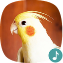 Appp.io - Cockatiel Sounds