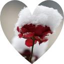 عاشقانه های زمستان
