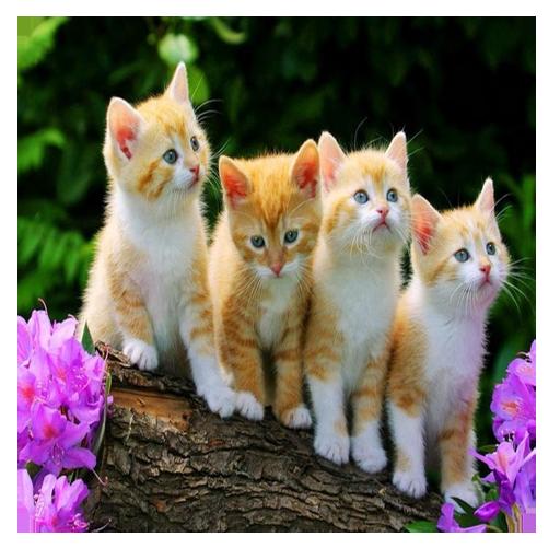 گربه های خانگی