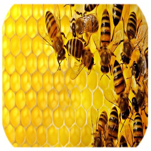 آموزش زنبور داری