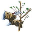 هرس صحیح درختان