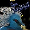 کبوتربازی(پرورش کبوتر)