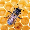 خواص درمانى عسل (جامع)