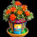 آموزش نگهداری از گل و گیاه