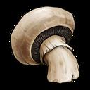 آموزش قارچ دکمه ای، صدفی، شیتاکه