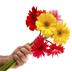 گل ها