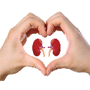 Kidney and urinary tract