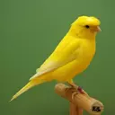 Canary Education (professional)