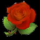 ضرب المثل ها گل سرخ
