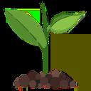 پرورش گیاه در آپارتمان و خانه