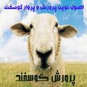 کسب درامد با پرورش گوسفند