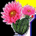 گل و گیاهان اپارتمانی