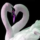 محبت درمانی