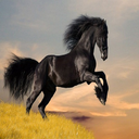 نژاد اسب ها