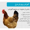 آموزش پرورش مرغ+مرغداری