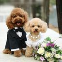 معرفی بهترین نژاد های سگ