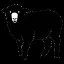 صفر تا صد پرورش گوسفند