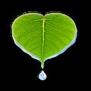 گیاهان پر خاصیت