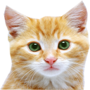شناخت و تربیت گربه