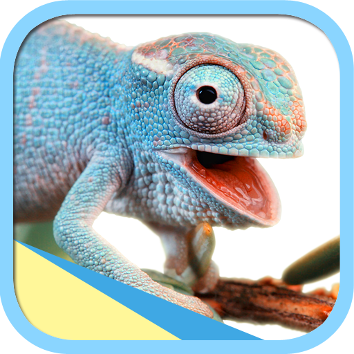 Knowledge of cold-blooded creatures - Download | Install