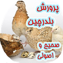 Quail Training Fattening breeds
