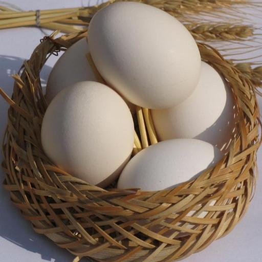 کاسبی با تخم مرغ