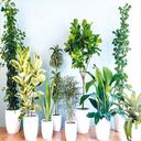 پرورش گلهای آپارتمانی و زینتی