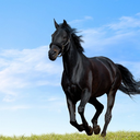اسبها