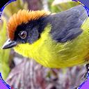 پرنده شناس