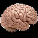 مخ(تست هوش)