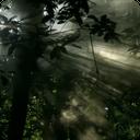 پس زمینه زنده جنگل